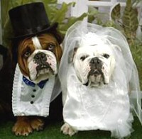 "The image ""http://www.livingwatermusic.com/images/dog-bride-groom-200-c.jpg"" cannot be displayed, because it contains errors."